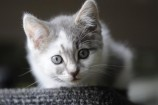 Don't leave kittens like Paige to their fate. 137792 Picture: STEWART CHAMBERS