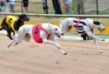 Greyhound_114562_02.jpg